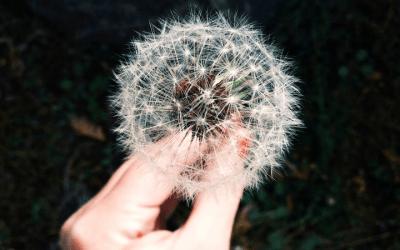 9 Natural Remedies to Beat Spring Allergies