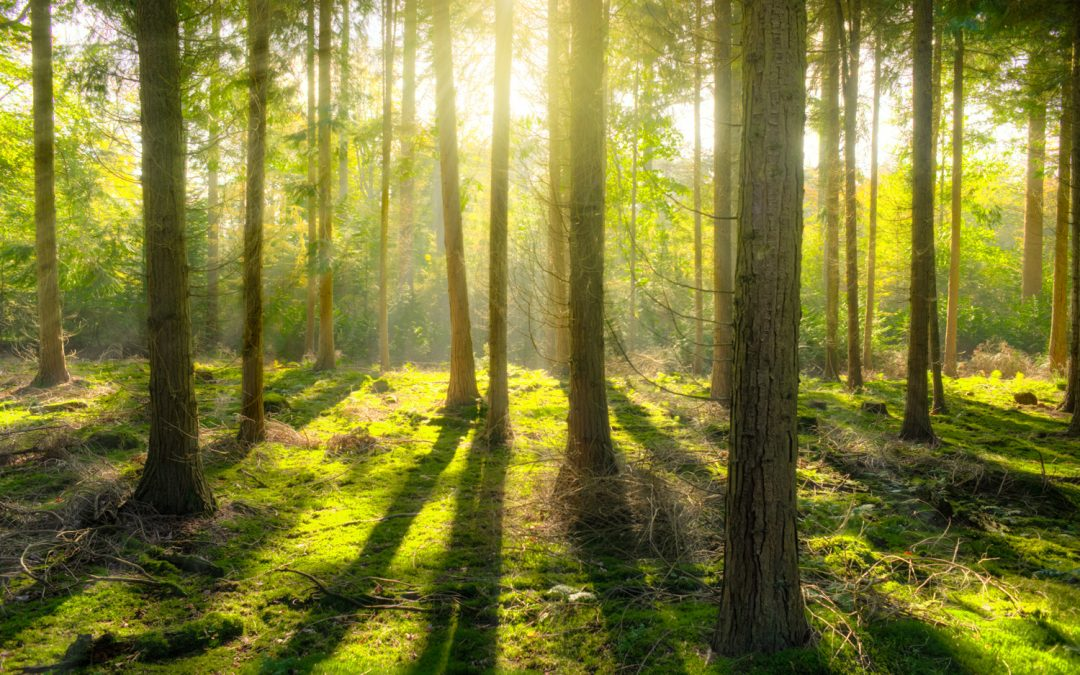 Research Proves Nature is Good for You